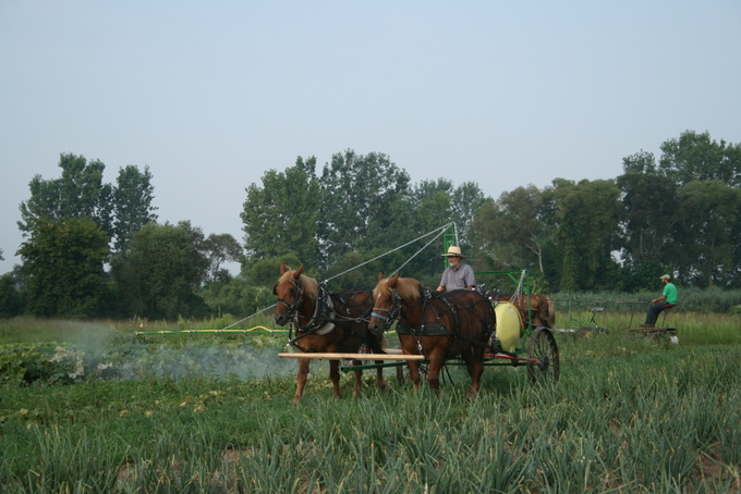 Horse Drawn Sprayer in Action