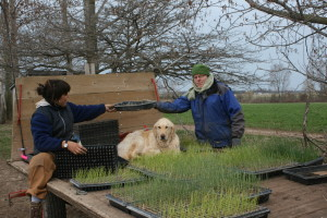 Transplanting Onions with Help From Robin Grindley - CSA member
