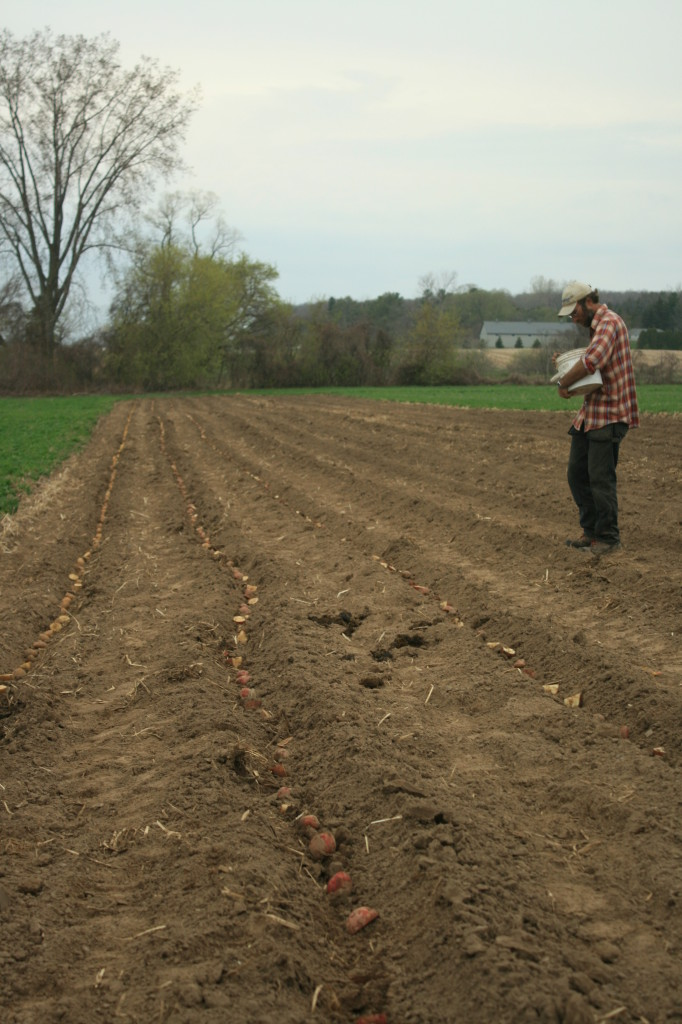Bill Planting Potatoes