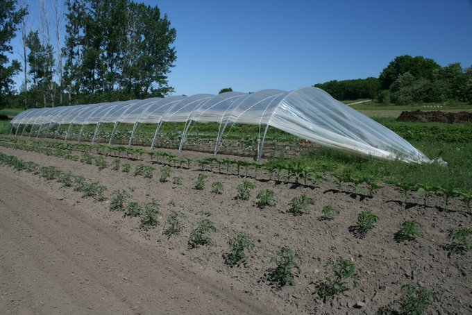 Cucumber Hoop House