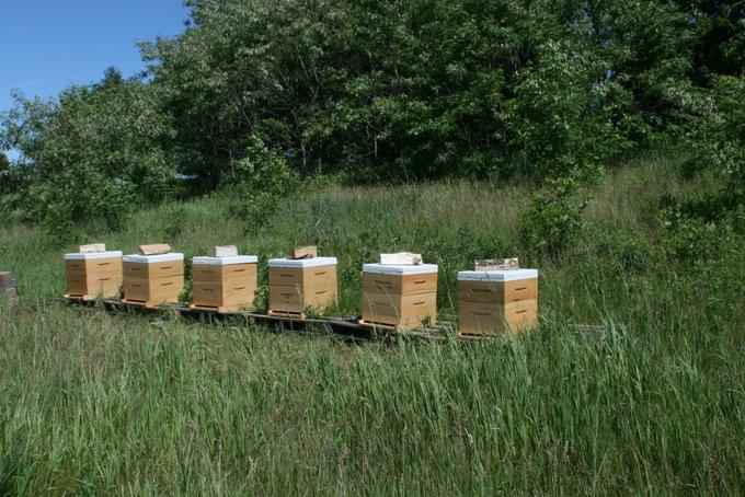 New Bee Yard on  Farm