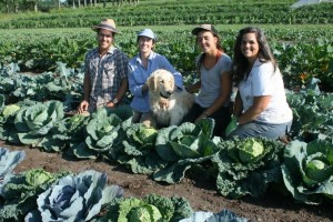 Apprentice Team in the Cabbage Patch with Caesar
