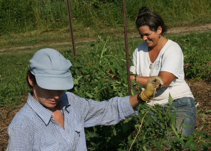 Caitlin and Jayme Trellising Tomatoes