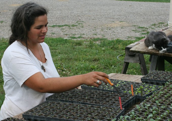 Jayme Planting Head Lettuce Transplants