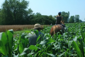 Cultivating Sweet Corn for the Last Time