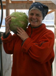 Giant Winter Kohlrabi