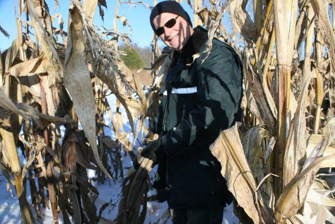 Jim Picking Field Corn