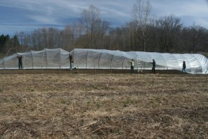 Putting on the Hoop house Plastic