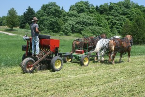 Aden Planting Buckwheat with Ken's Horse Drawn no-till Drill.