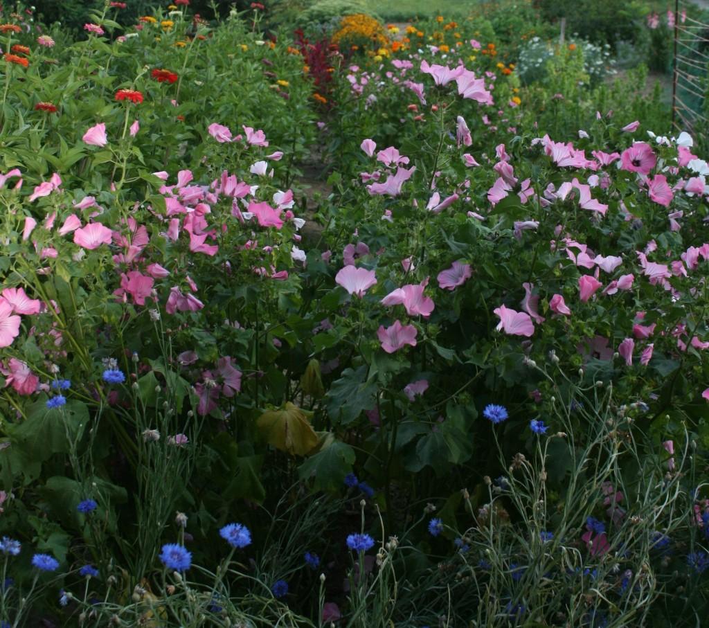 CSA Cut-Your-Own Flower Garden