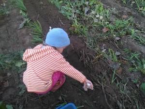 Della Planting Garlic