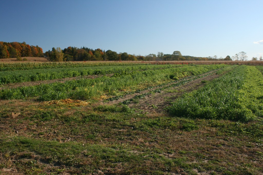 2015 CSA Garden ready for winter with reshaped head lands seeded down.