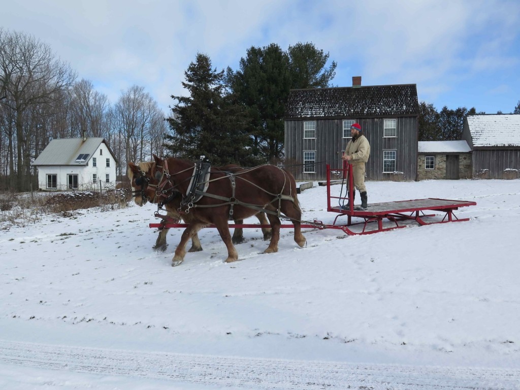 Aaron Driving New Sleigh with Suffolk Punch Horses