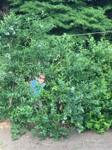 Della in the blueberry bushes