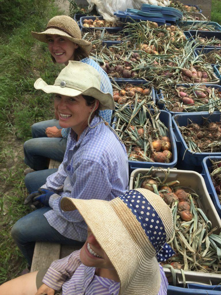 Onion harvest! Heidi, Ellen & Kelsey